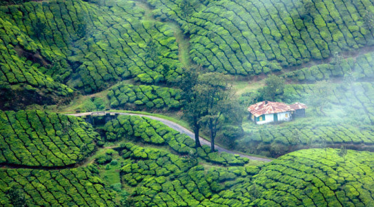 a-treditional-home-in-munnar-tea-plantaions-